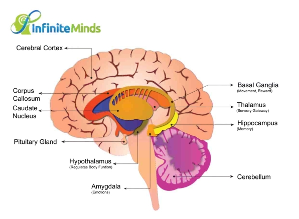 How does the mind work? s